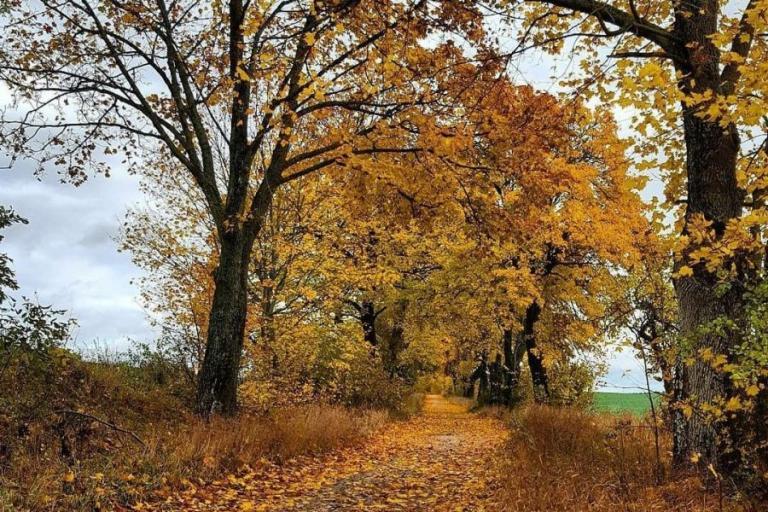 Łomża: Motyw w barwach jesieni