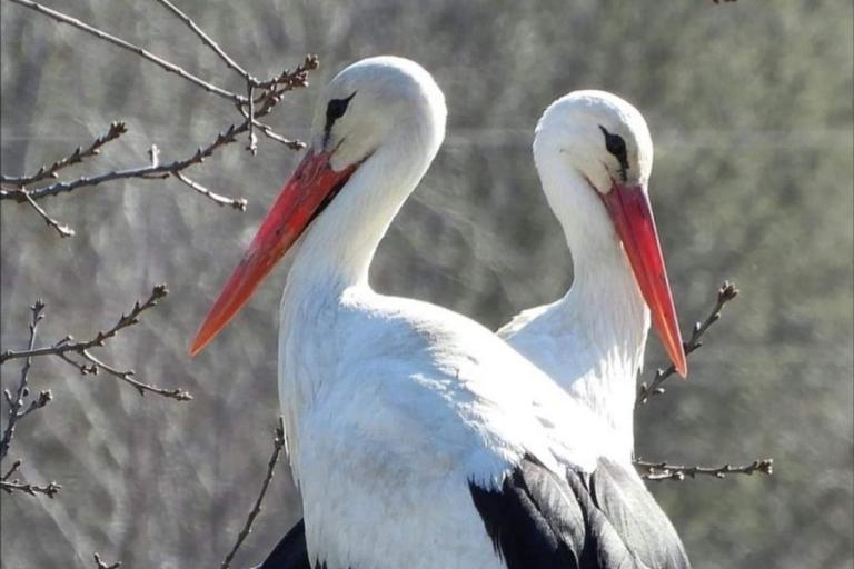 Łomża: Ptaki – zwiastuny wiosny