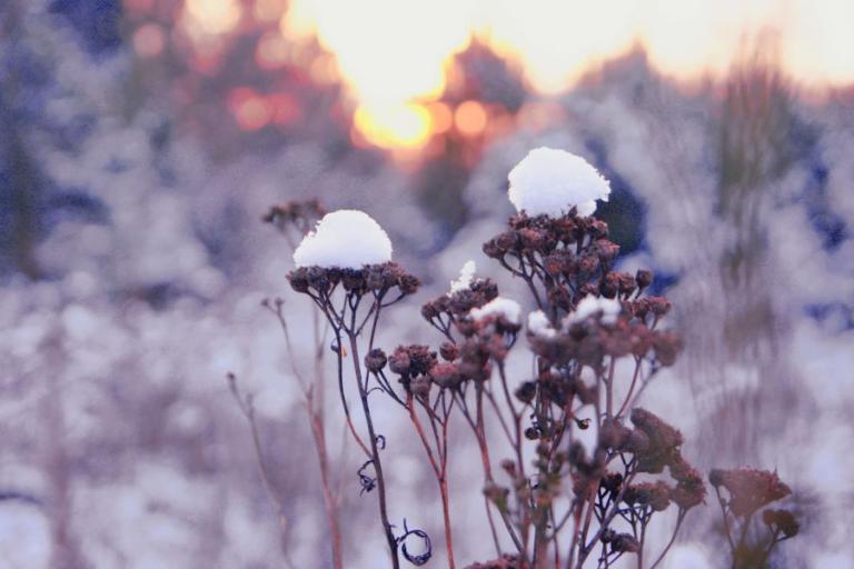 Białystok: Śnieżna fotografia